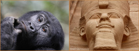 Mountain Gorilla female by Jonathan Rossouw (Uganda) and Abu Simbal temple detail by Markus Lilje (Egypt)