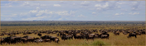 The Serengeti wildebeest migration by Rainer Summers (Tanzania)