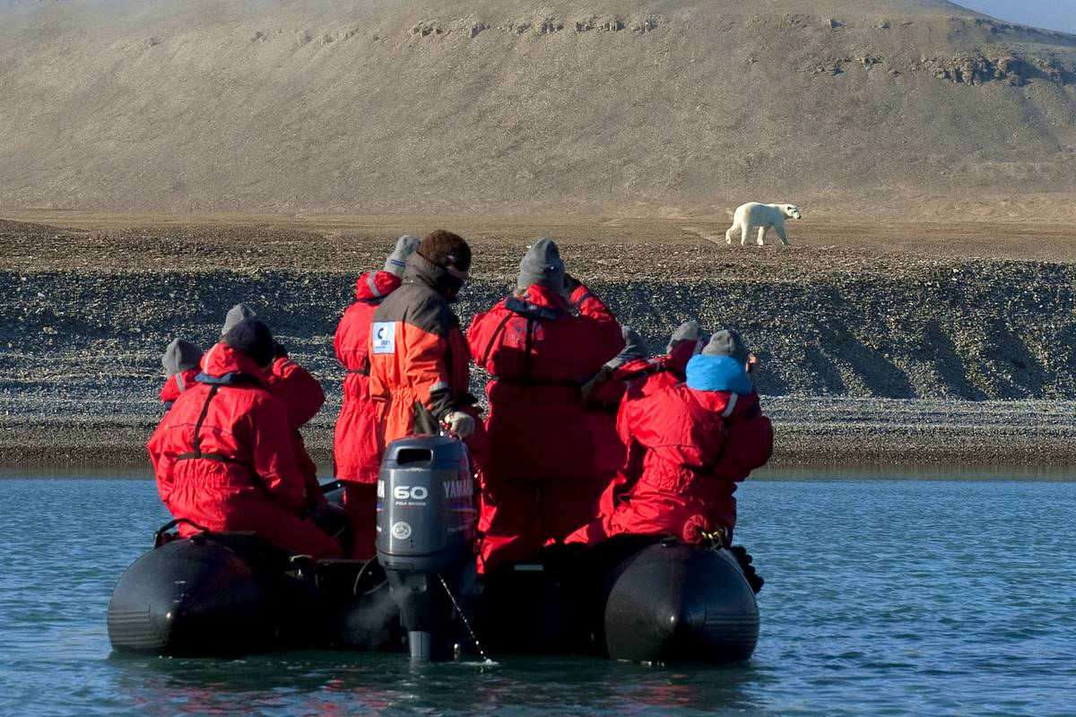 Photographing Polar Bears by Nina Stavlund