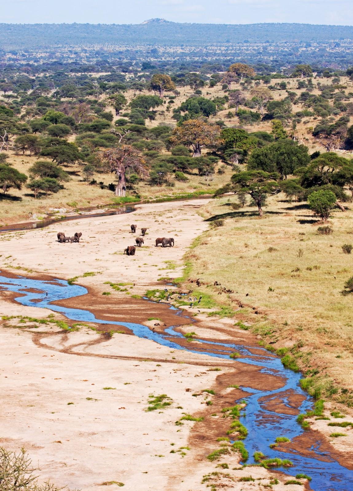 Quintessential African scene from Tarangire National Park, Tanzania